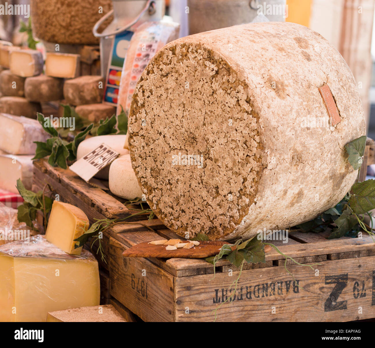 A round of rind covered cheese. A display at a cheese vendor's market stall. L'isle-sur-la-Sorgue, Provence, - Stock Image