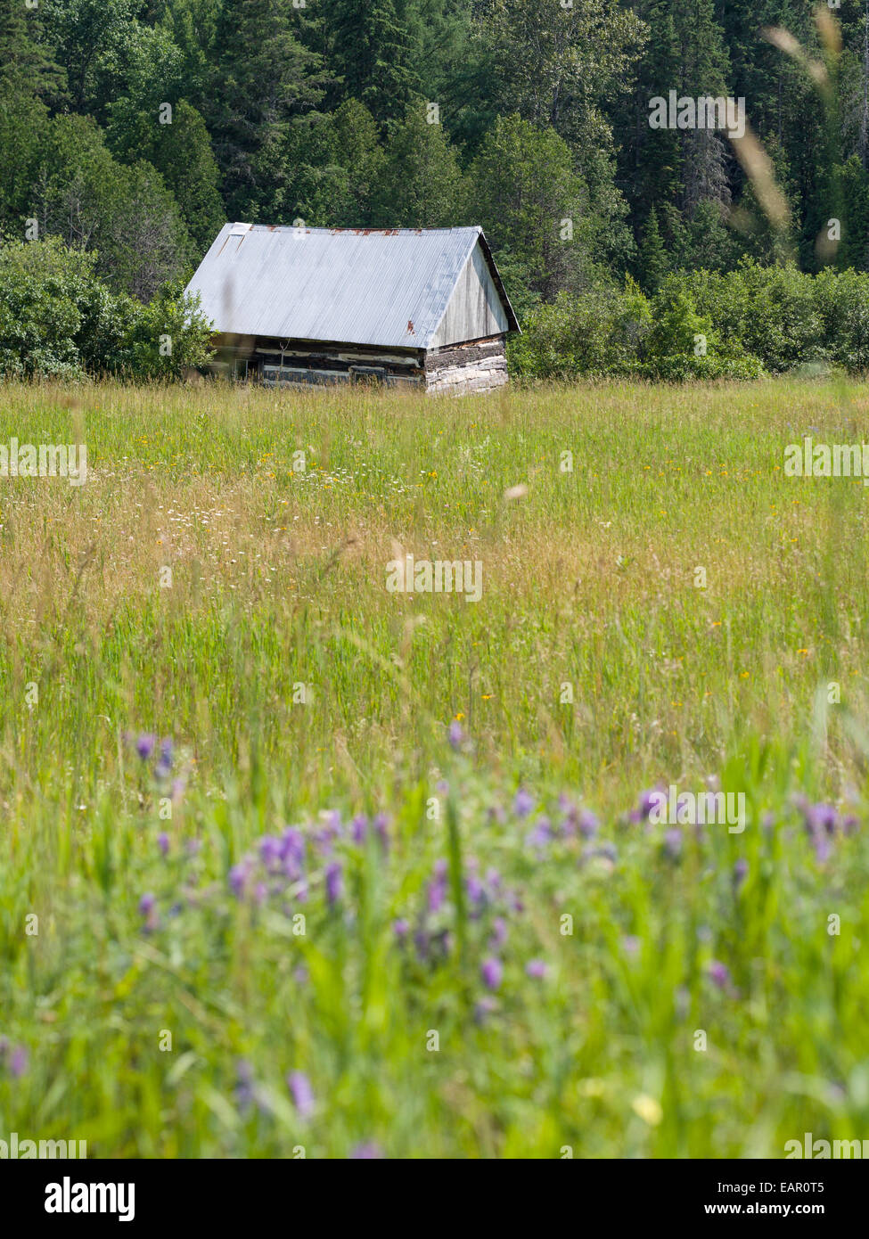 Isolated Log Cabin in a grassy field. Tommy's Cabin at the edge of the woods Barnes Lake, Thorne Township, Quebec, - Stock Image