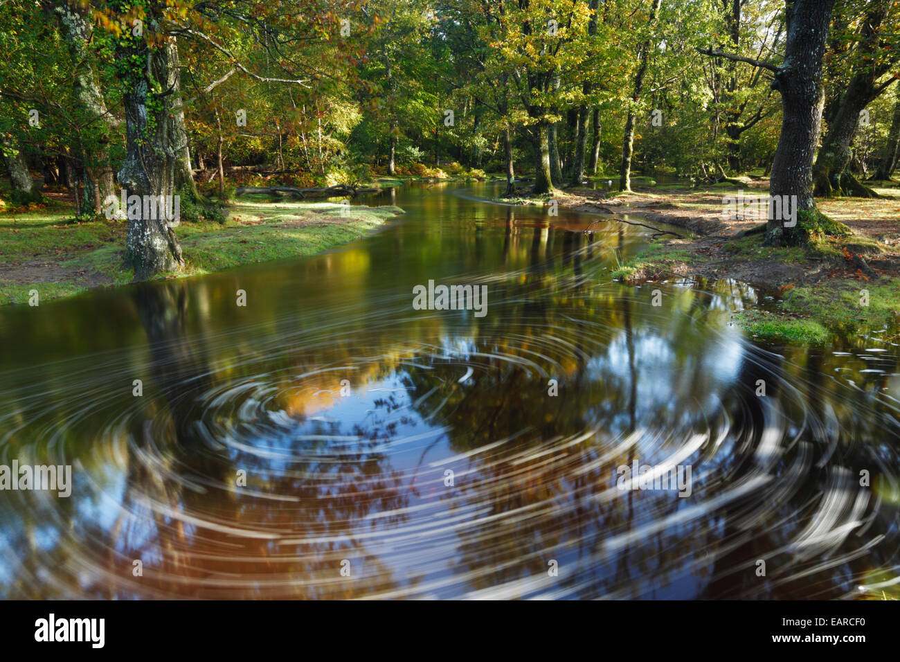 Ober Water. New Forest National Park. Hampshire. England. UK. - Stock Image