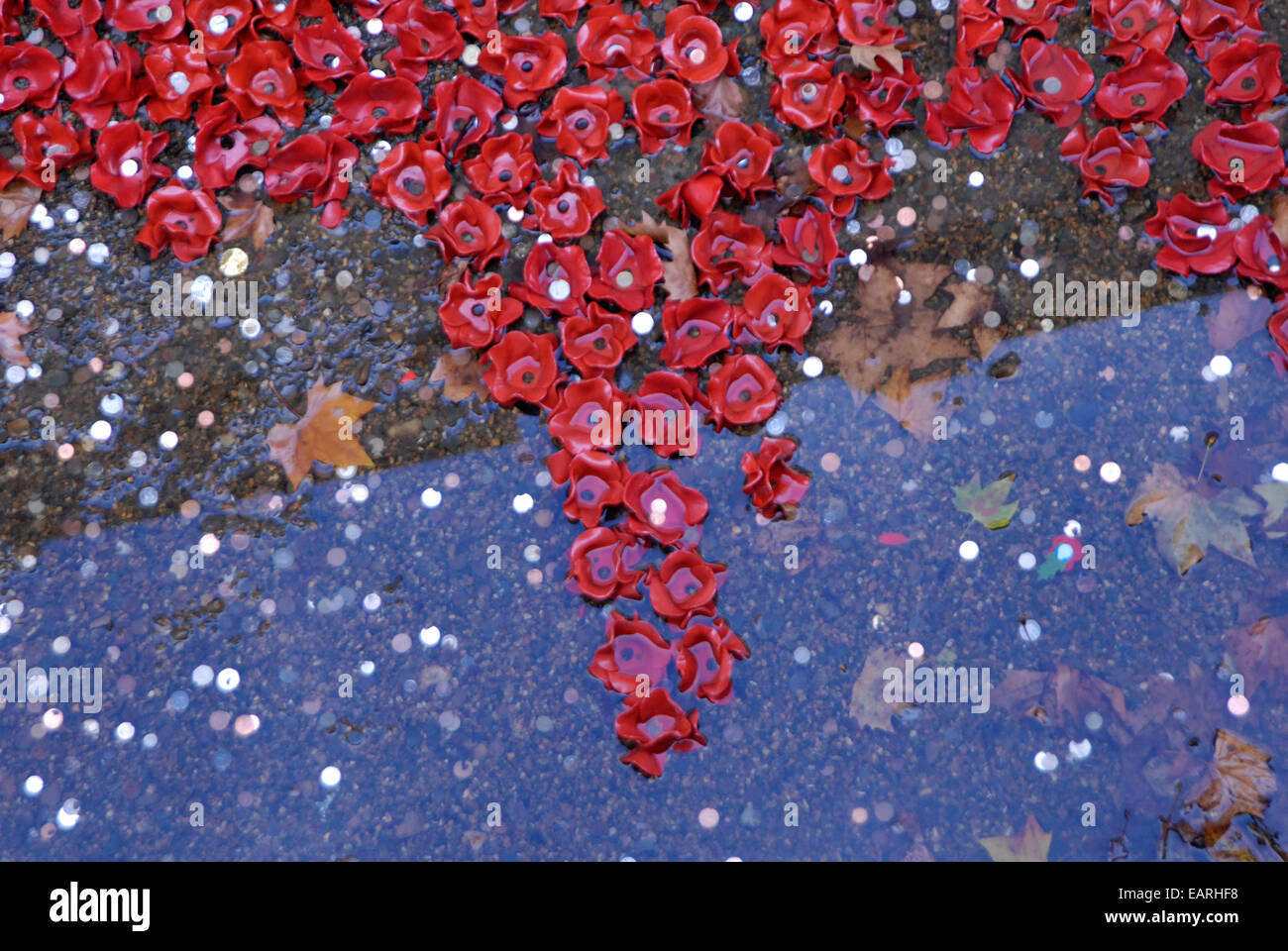 Some of the 888,246 ceramic poppies in the moat  at The Tower of London art installation in rainwater, fallen leaves - Stock Image