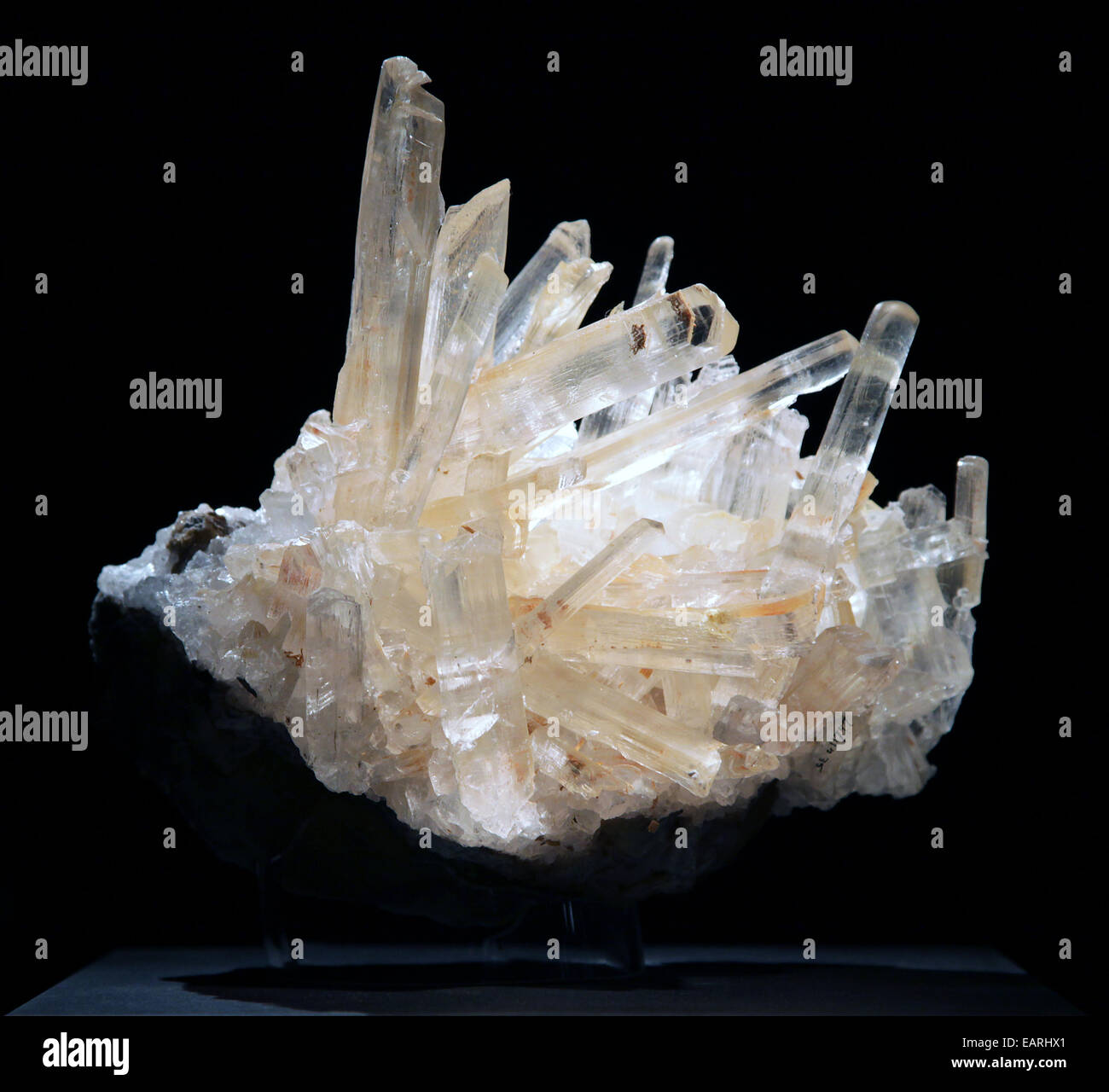 Selenite cluster of the mineral gypsum. - Stock Image