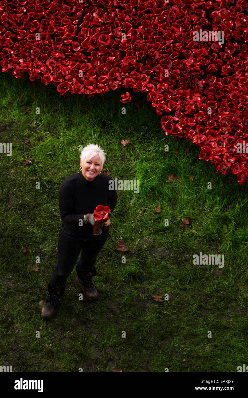 Volunteer removing Poppies installation from the Tower of London in November 2014 Stock Photo