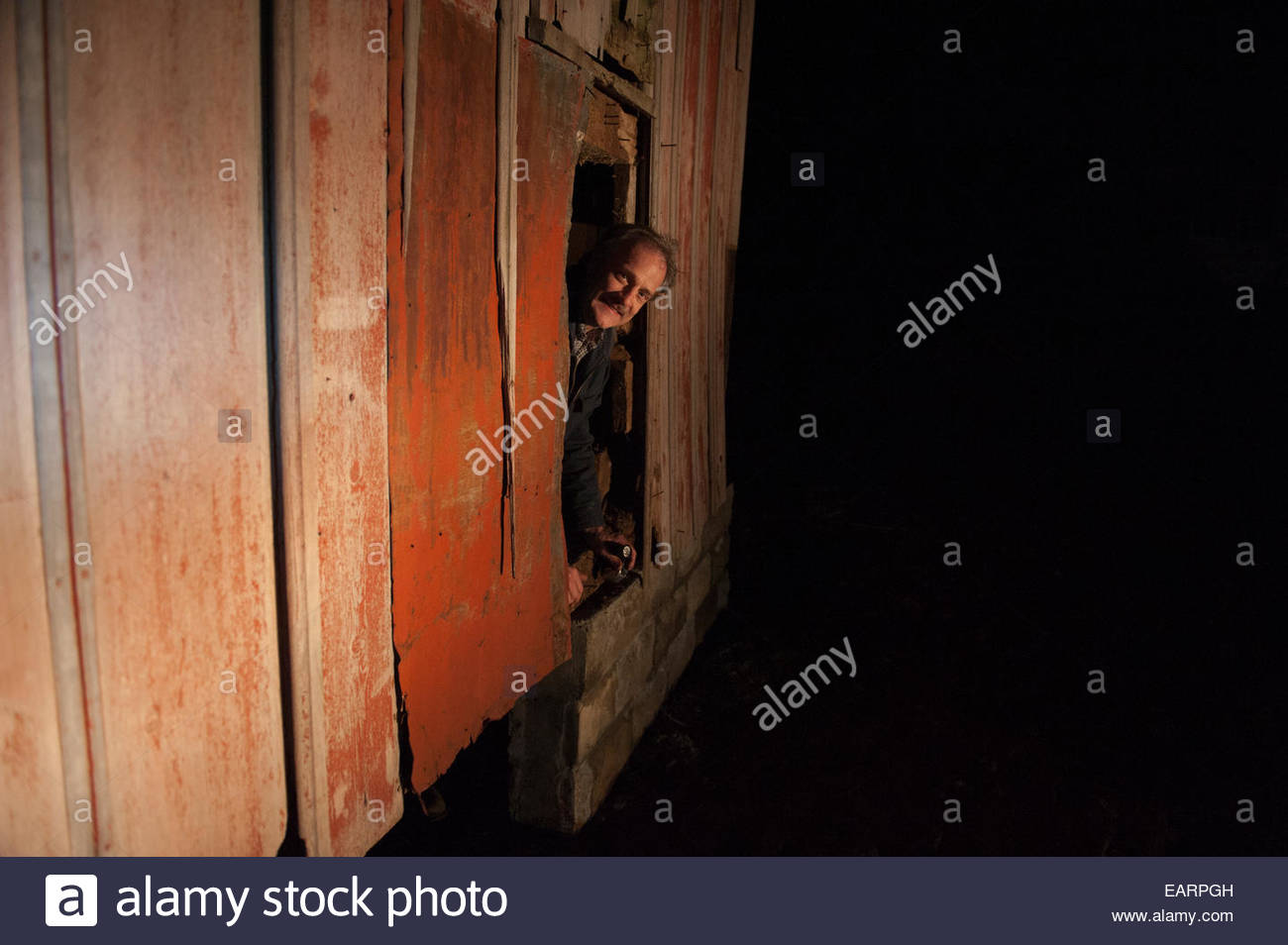 A mean leans out of a hole in an old barn. - Stock Image