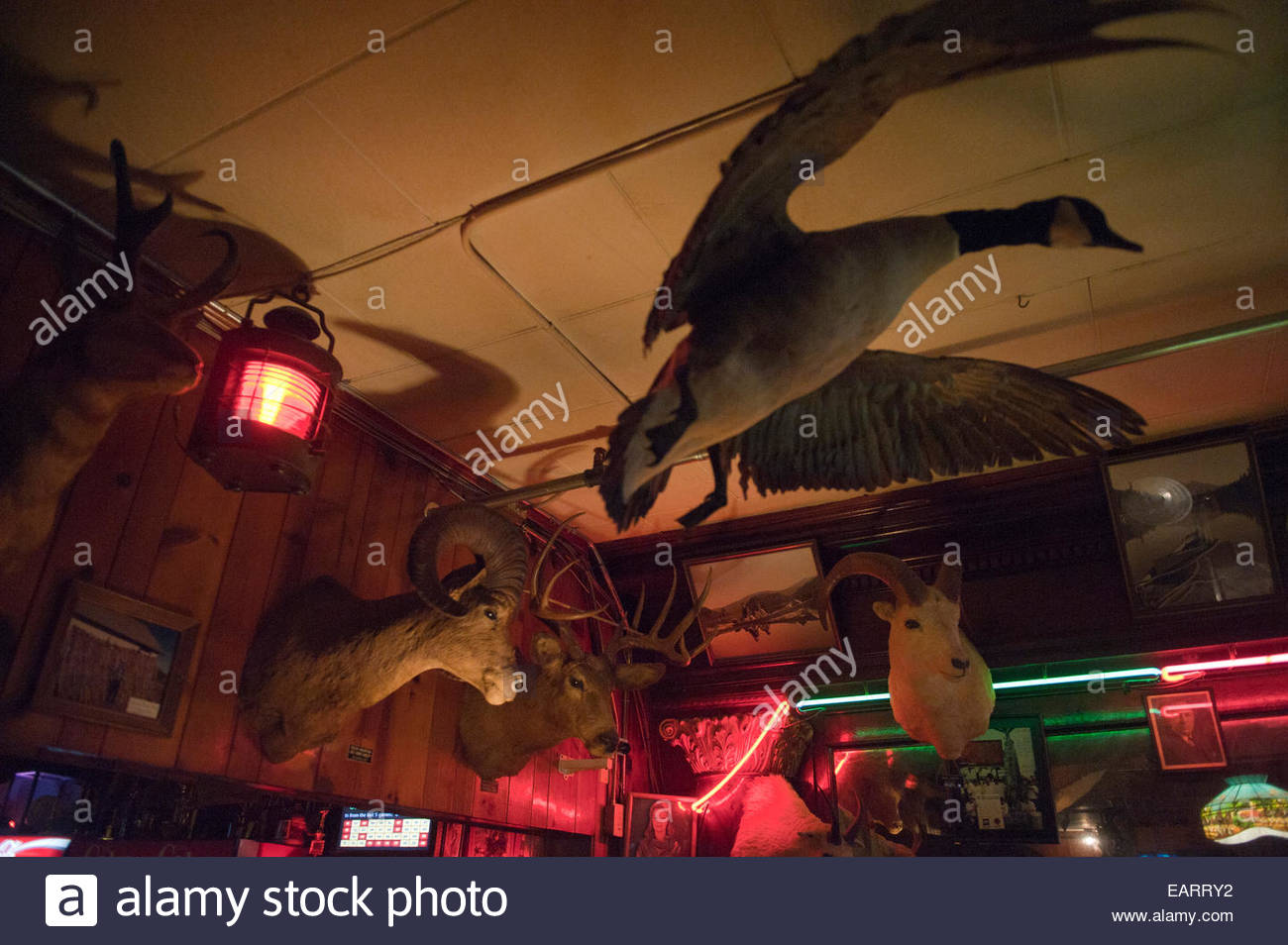 Taxidermied animals decorate a diner. - Stock Image