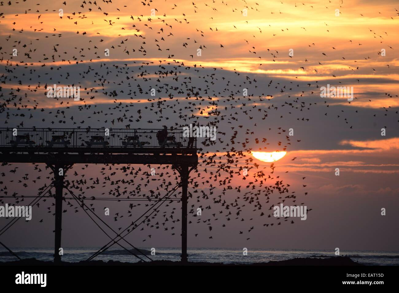 Aberystwyth, Wales, UK. 20th November, 2014. Starlings roosting on Aberystwyth  pier at sundown. The dramatic murmuration Stock Photo