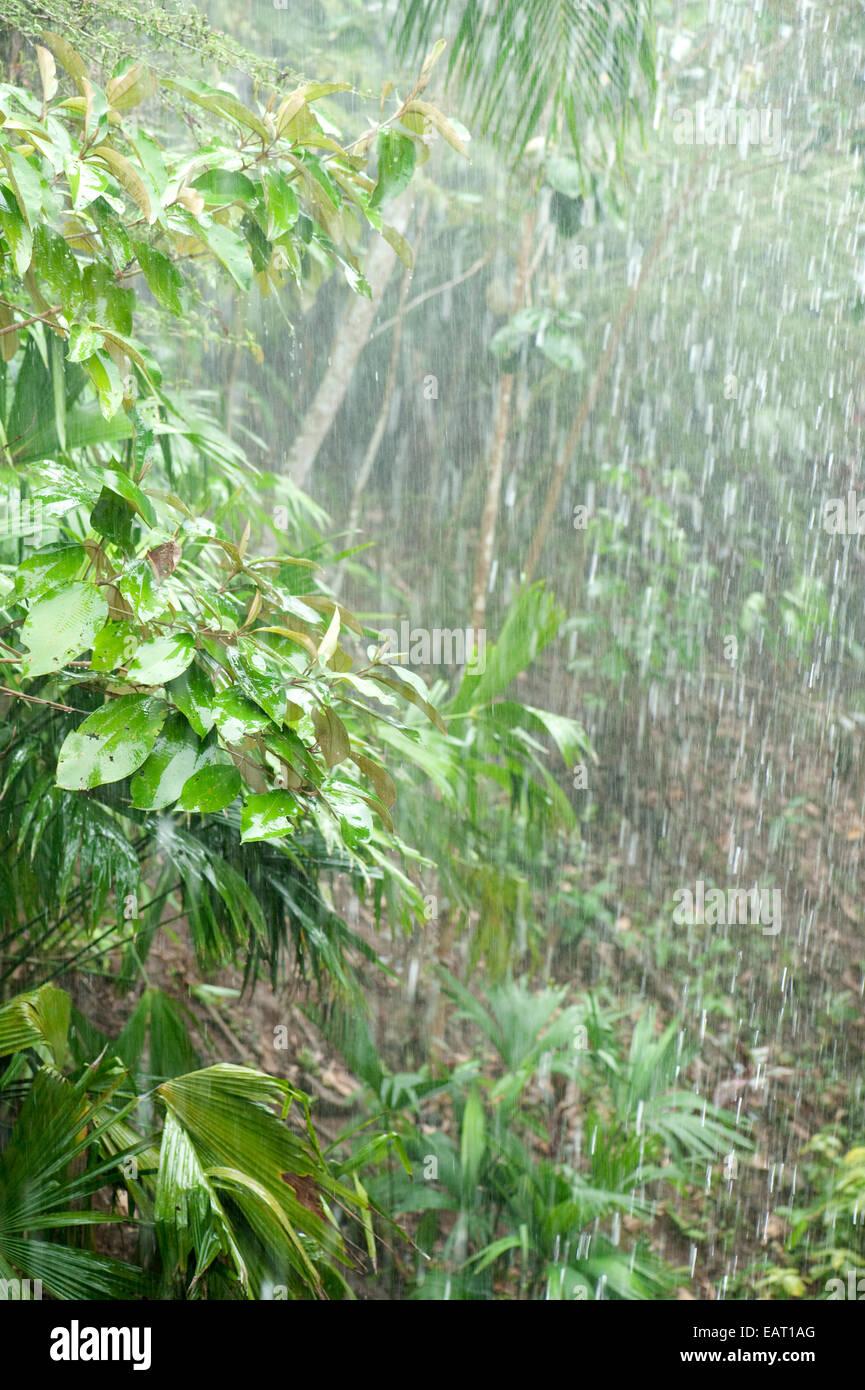 Heavy Rainfall in jungle Panama - Stock Image