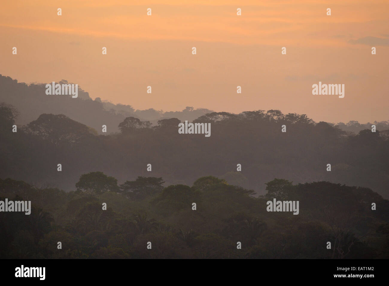 Sunrise View over Jungle Canopy Panama Stock Photo