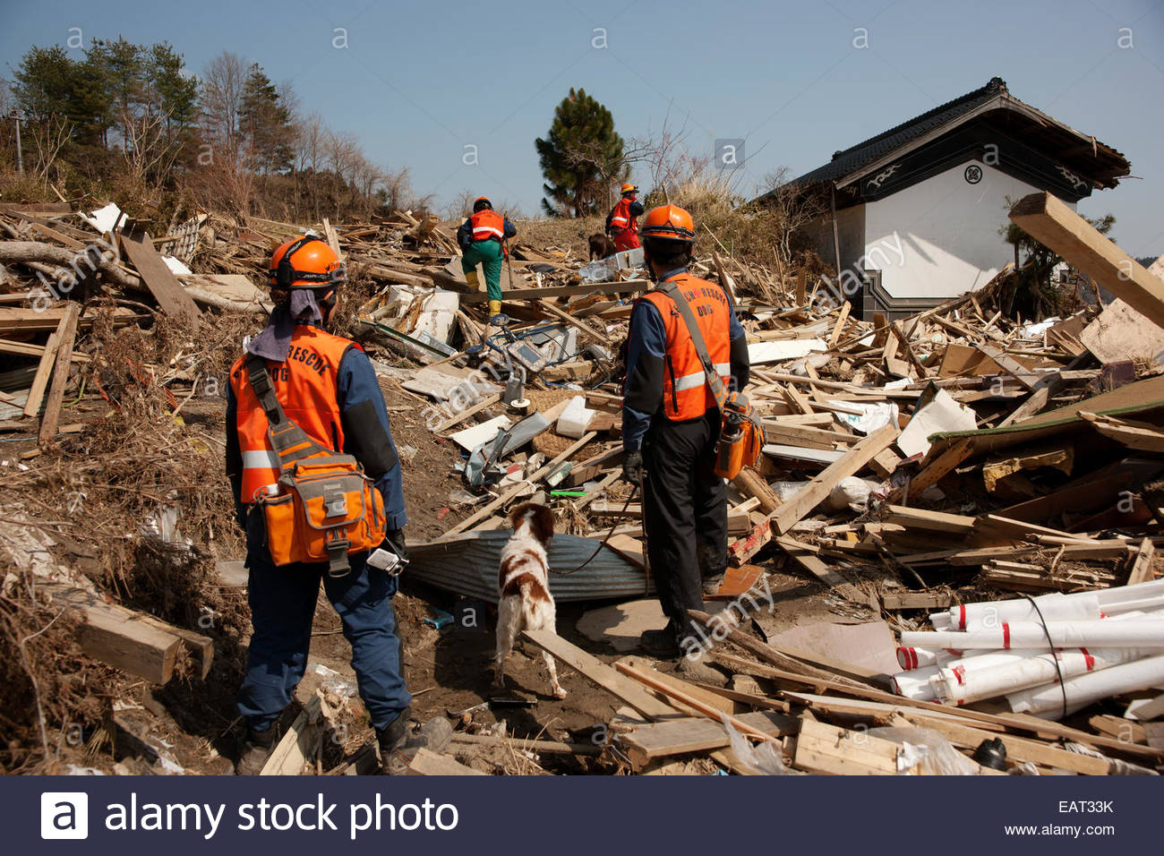 A dog search and rescue team looks for bodies in the tsunami wreckage. - Stock Image