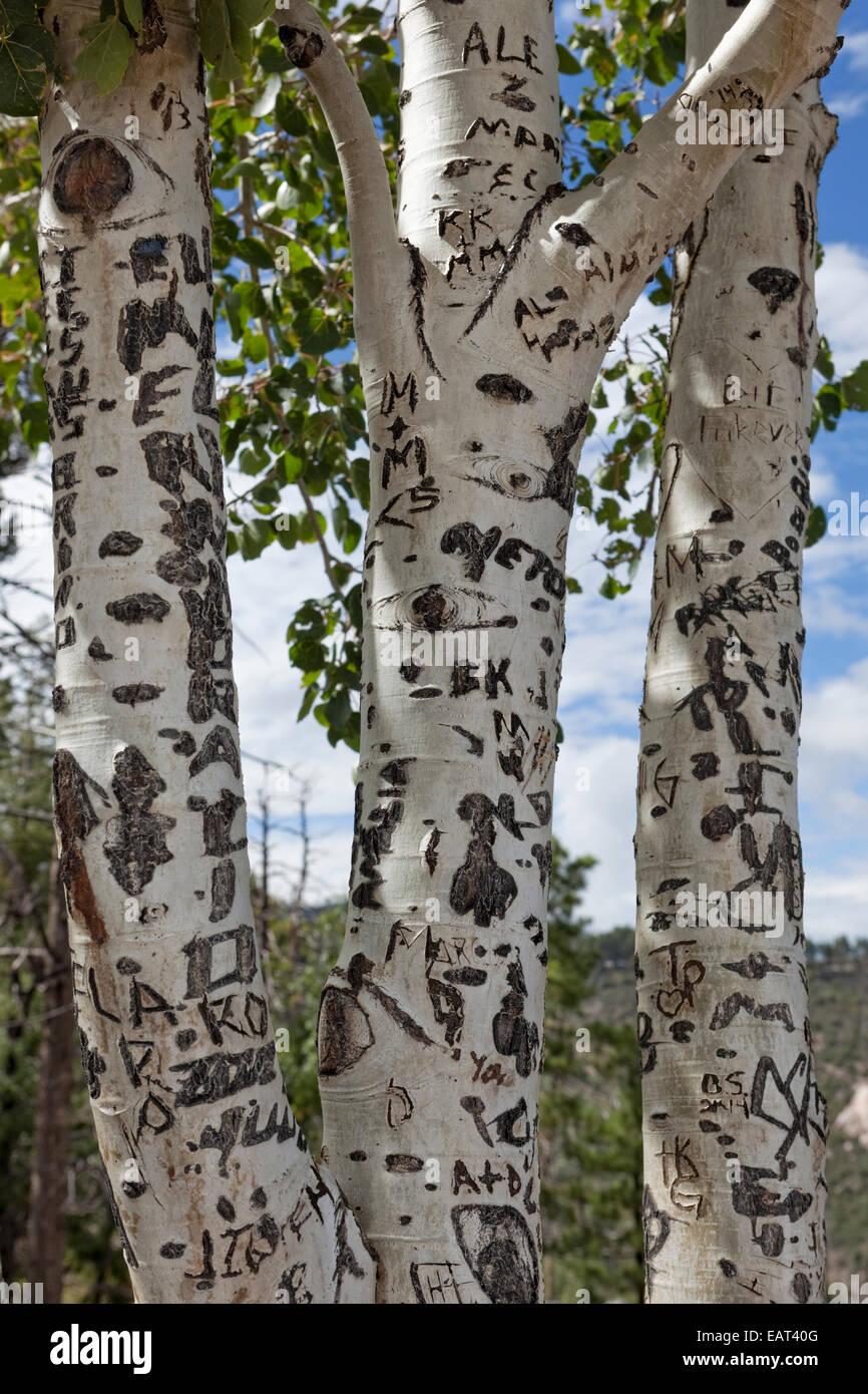 Graffiti Defacing Aspen Trees - Stock Image