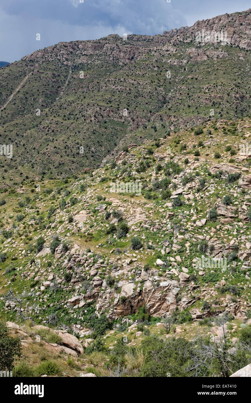 The exposed geology on Mt. Lemmon is granite and a metamorphic granite called gneiss. - Stock Image