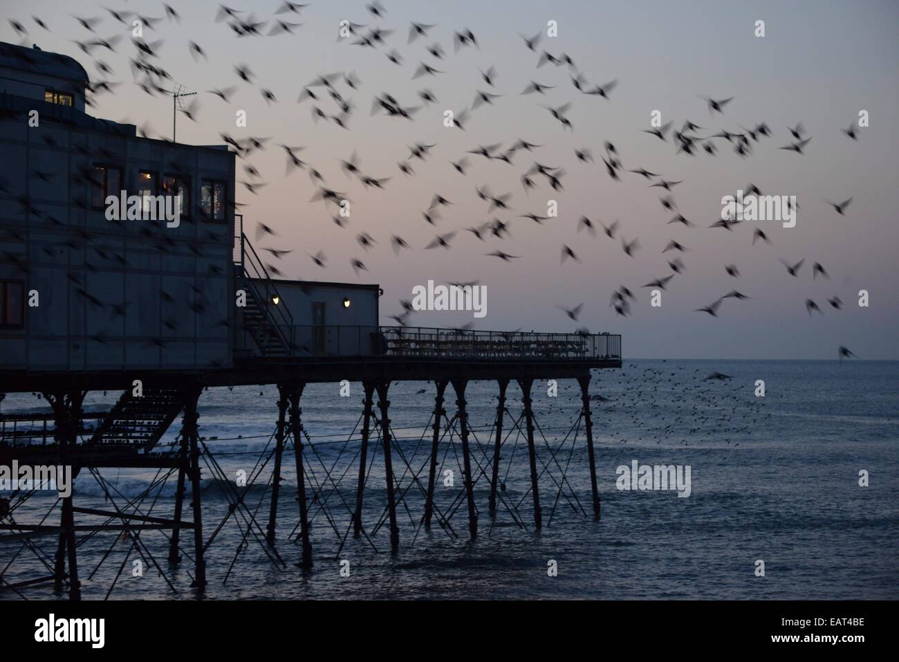 Aberystwyth Wales UK , 20 November 2014  Starlings roosting on Aberystwyth  pier at sundown. The dramatic murmuration Stock Photo
