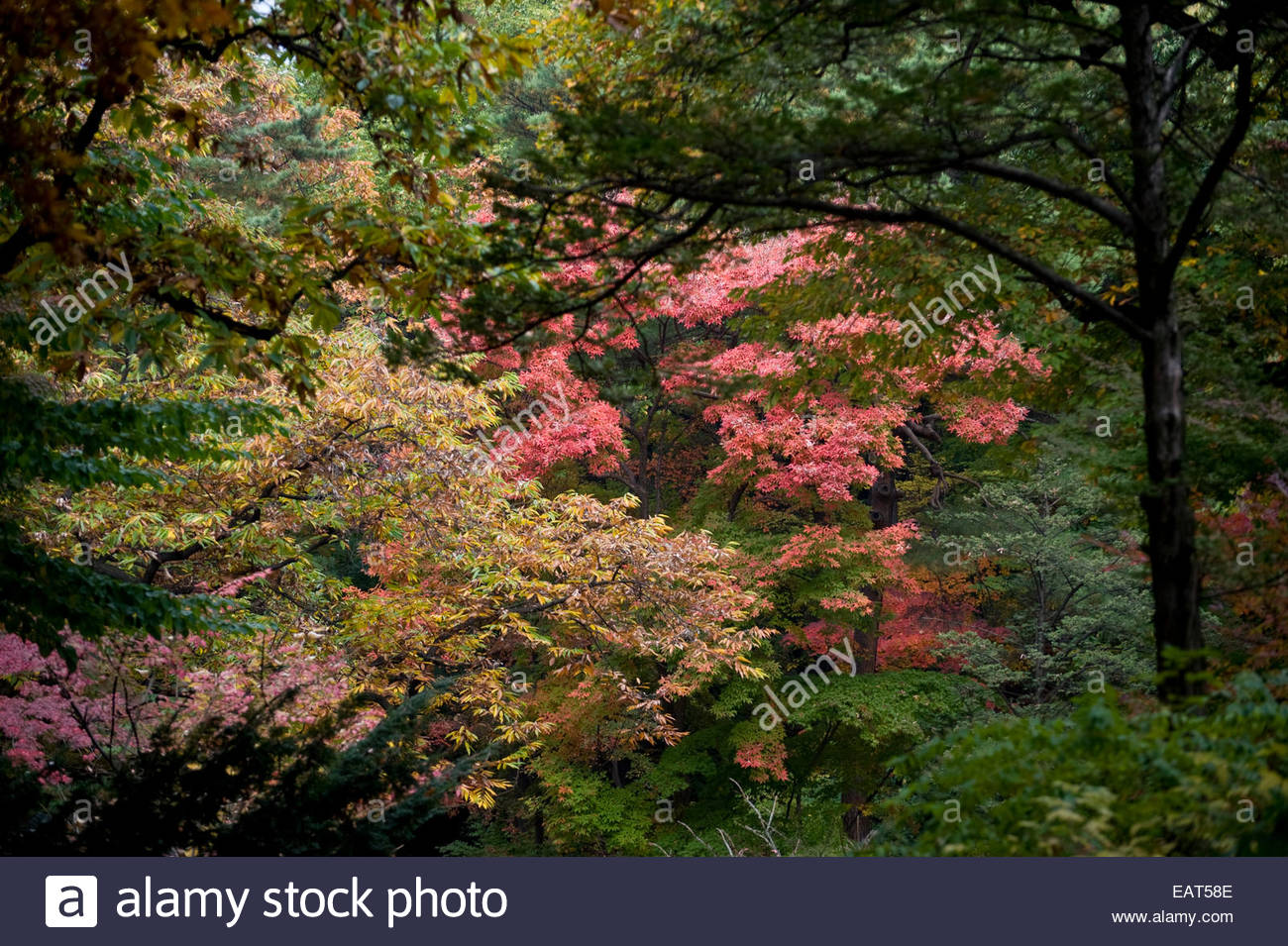 Leaves changing from green to red and pink in the secret garden ...