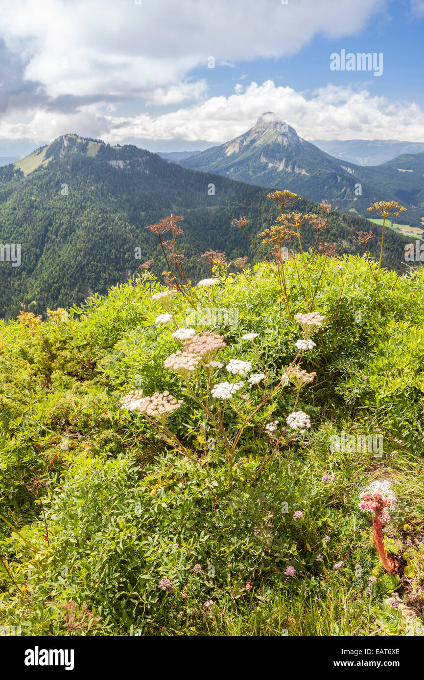 View of the Chamechaude, Parc Naturel de la Chartreuse, Isere, Rhône-Alpes, France - Stock Image