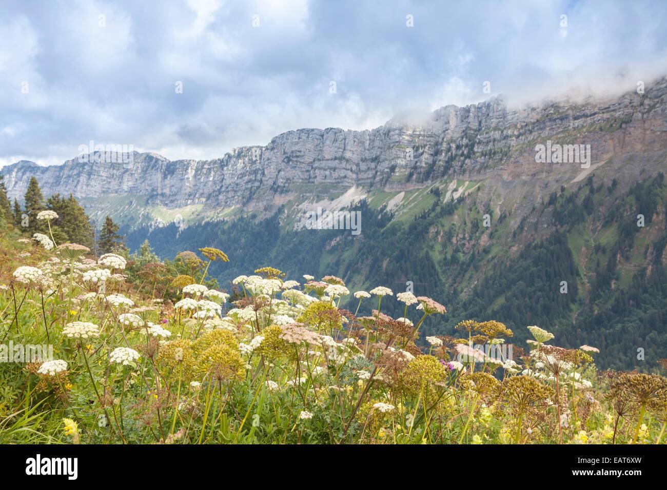 Parc Nature de la Chartreuse, Isere, Rhône-Alpes, France - Stock Image
