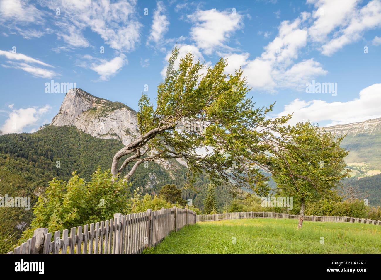 Around Saint Pierre d'Entremont, Parc Naturel de la Chartreuse, Savoie, Rhône-Alpes, France - Stock Image