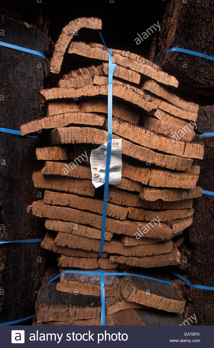 Cork oak bark is stacked and tied at a factory. - Stock Image