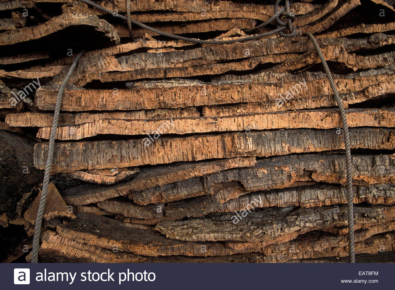 Cork oak bark is stacked at a factory and tied with rope. - Stock Image