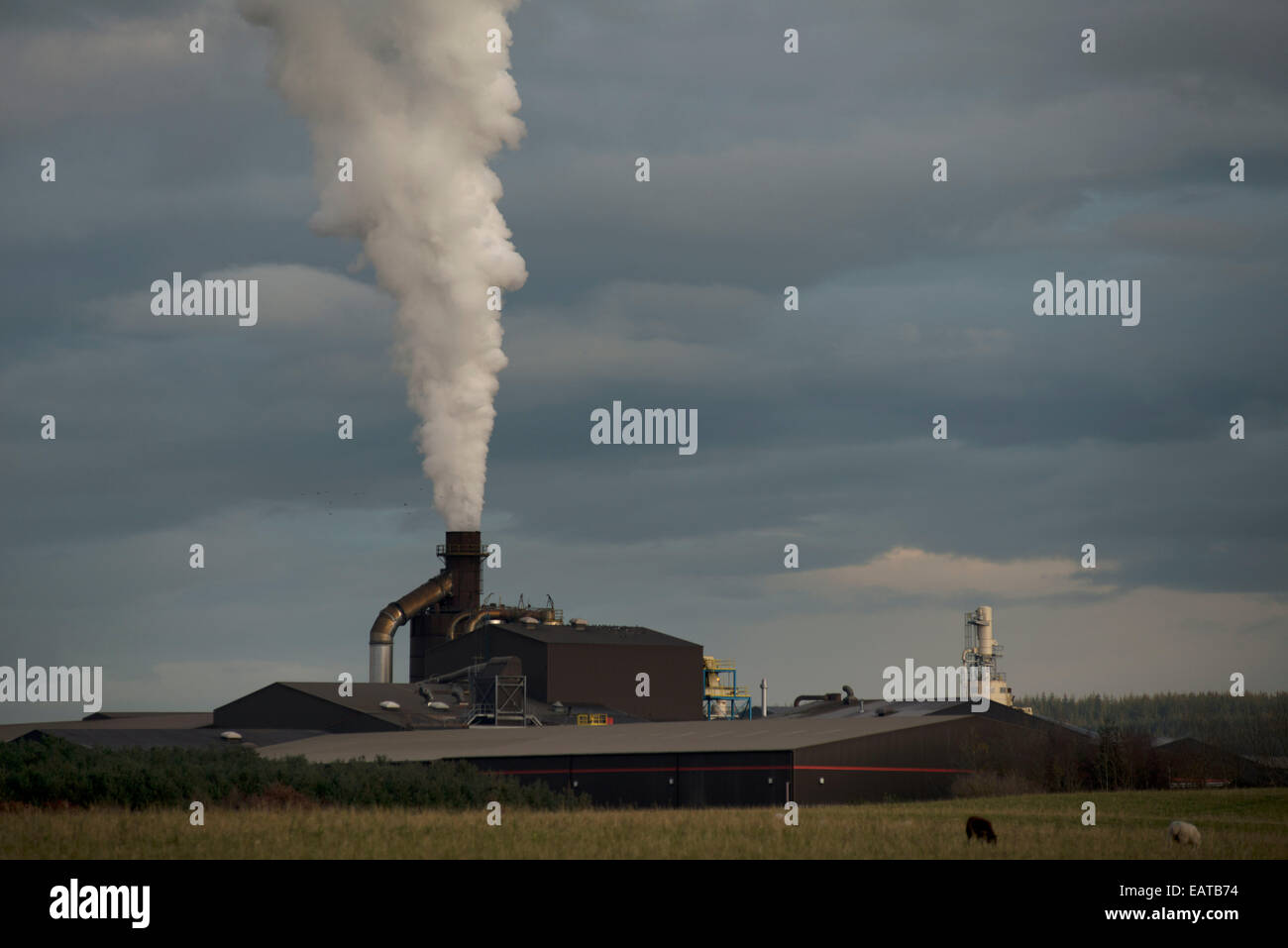 Norbord factory at Dalcross near Inverness - Stock Image