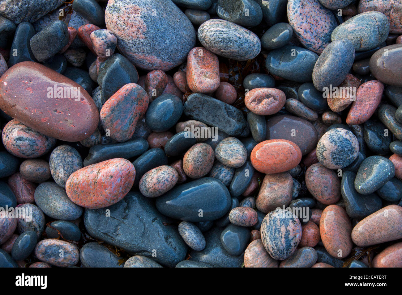 Close up of wet colourful pebbles on shingle beach at low tide - Stock Image