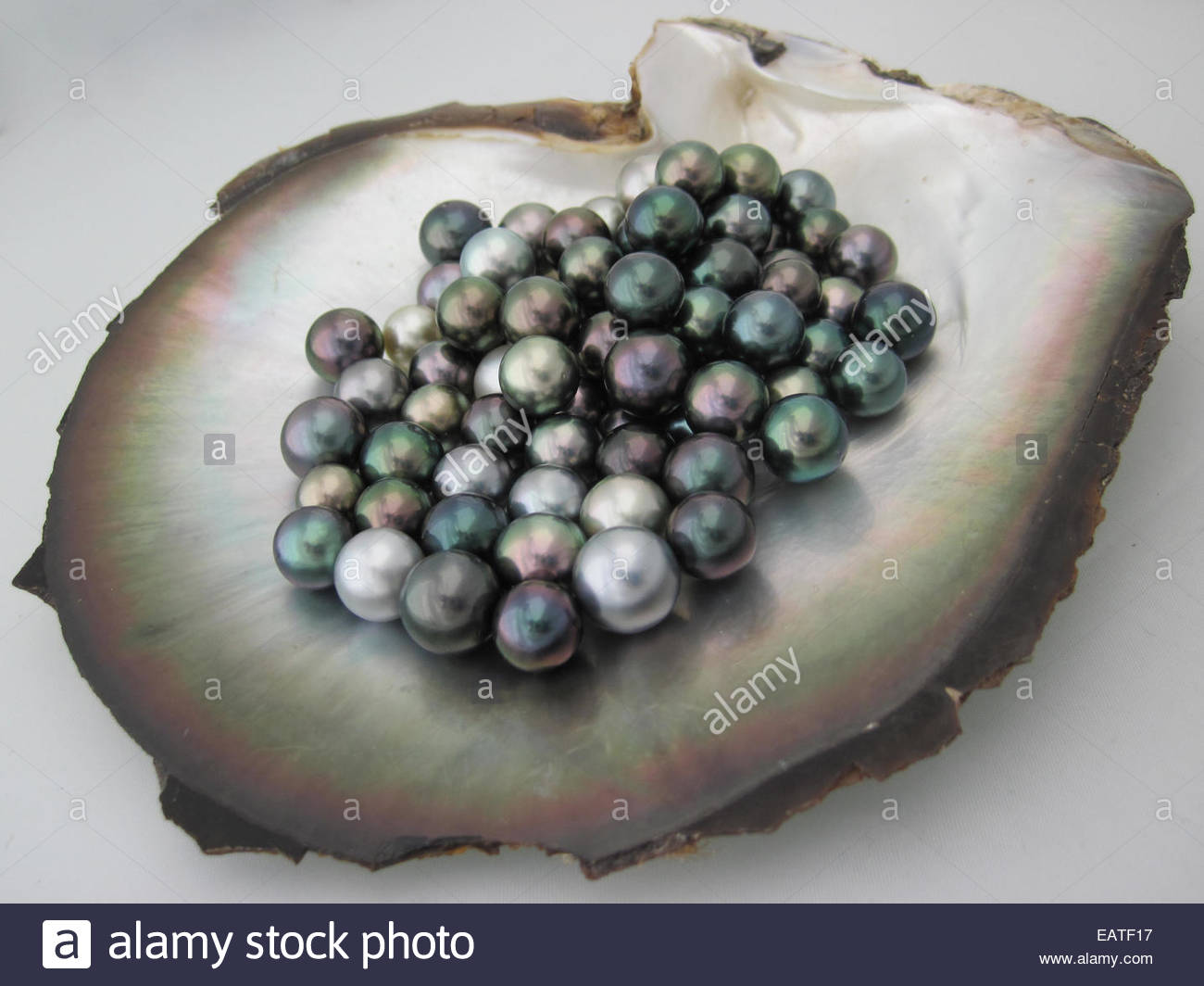 of mother sea pearl paspaley plate decorative accessories shell pearls products south