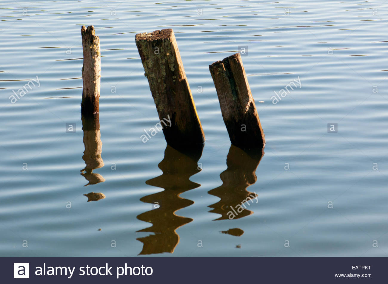 Wooden posts and their reflections in rippling water. - Stock Image