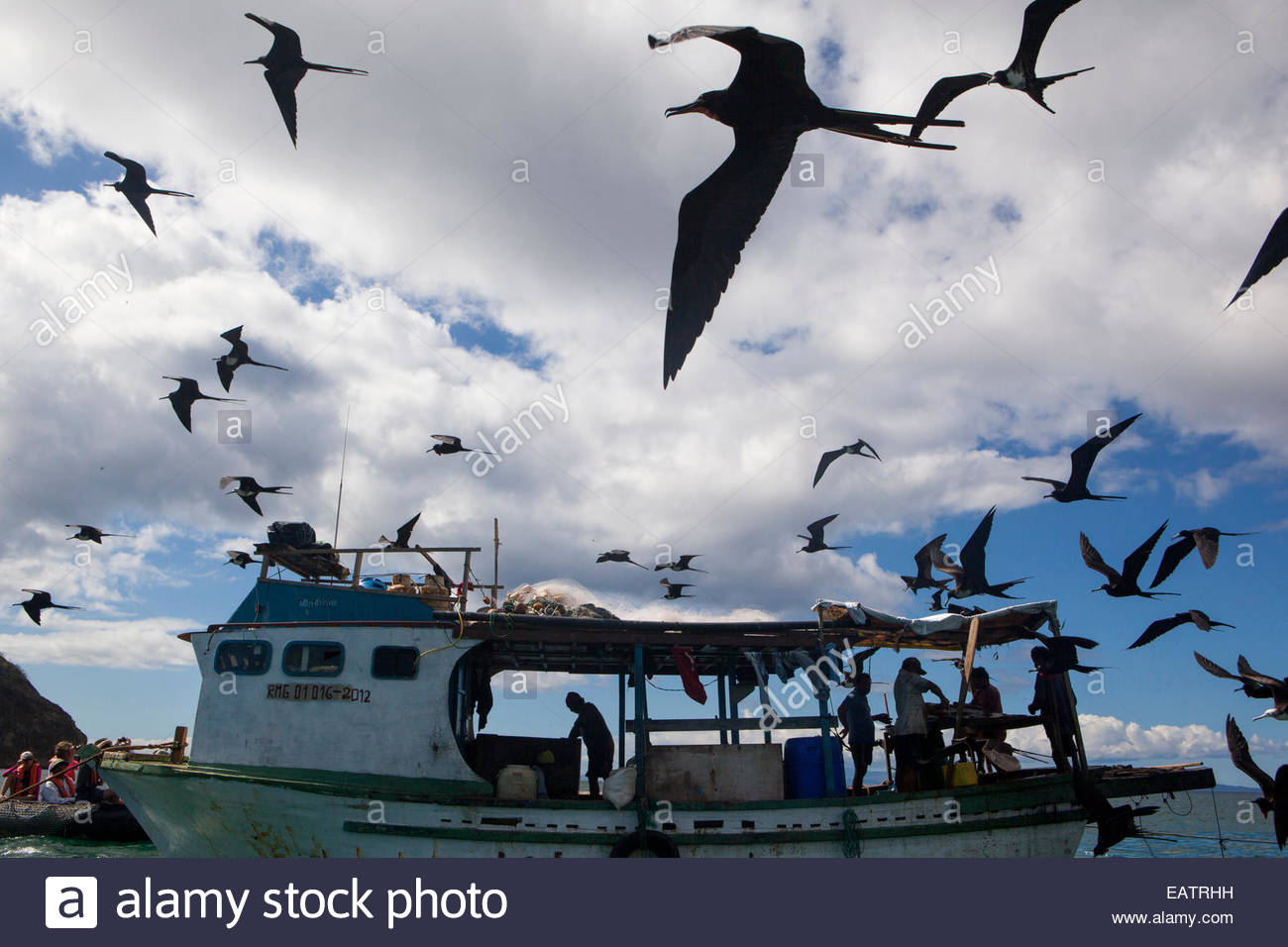 A flock of magnificent frigatebirds soar above a fishing boat. - Stock Image