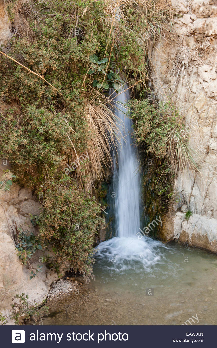 Ein Gedi oasis where KIng David wrote psalms. - Stock Image