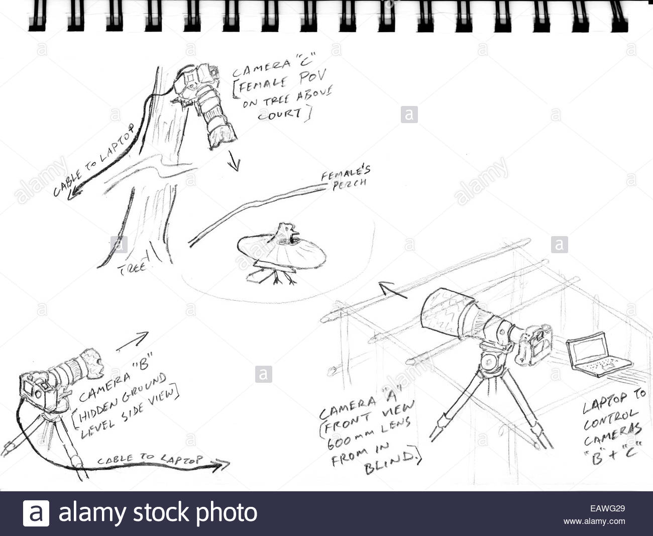 Diagram of a photographer's three camera setup to capture a parotia's courtship display. - Stock Image
