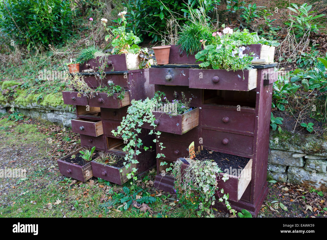 Creative use of an old chest of drawers for planting flowers at Garden Station, Langley, Northumberland UK - Stock Image