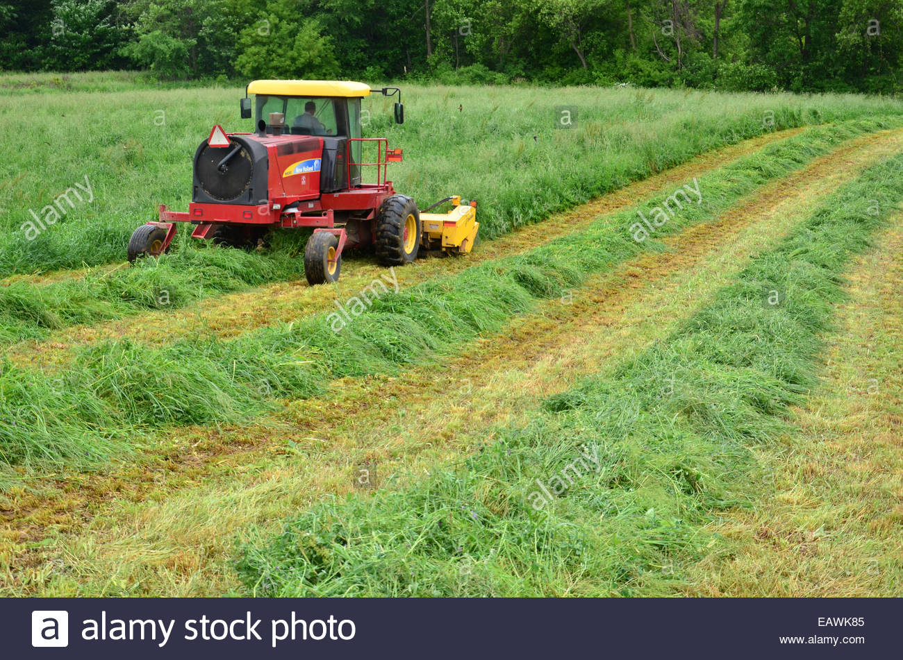 A farmer mows a field of fresh green hay with a discbine mower Stock