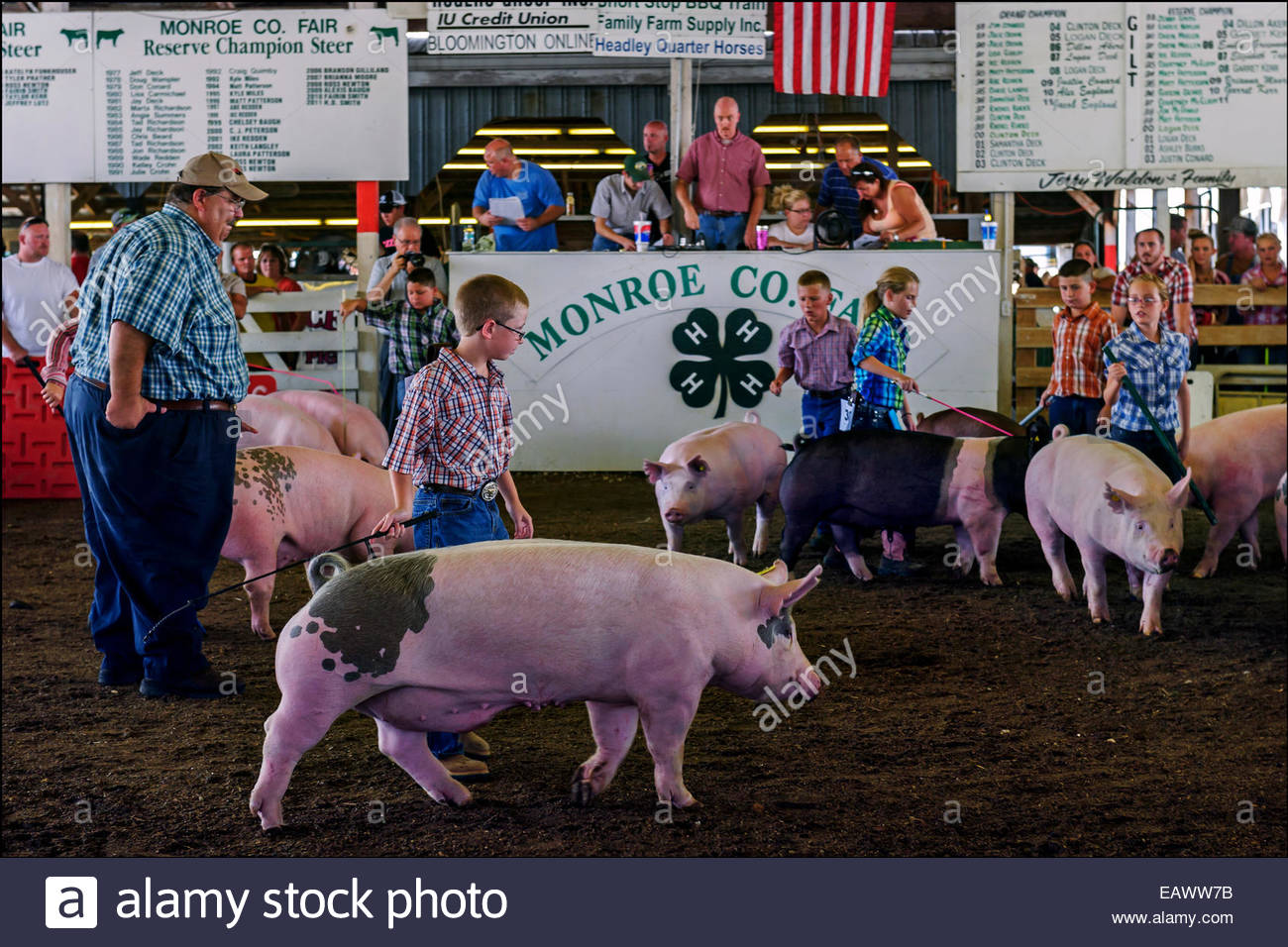 Some of the 900 young people who belong to the Monroe County, Indiana, 4-H program exhibit their prize pigs at the - Stock Image