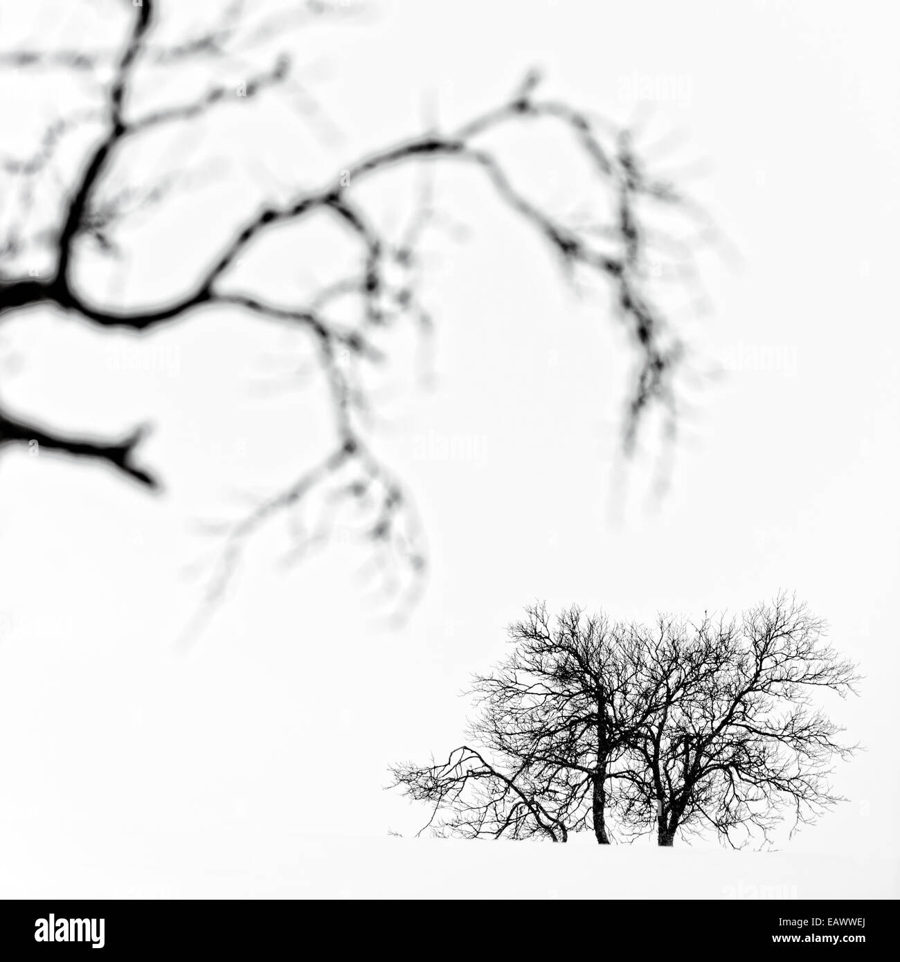 Blurred tree branches against a cloudy sky. - Stock Image