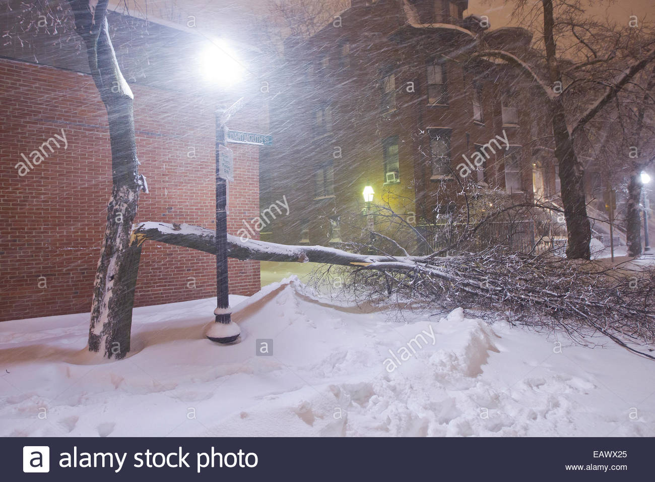 Heavy winds cause tree branches to break during the historic blizzard that hit Boston in 2013. - Stock Image