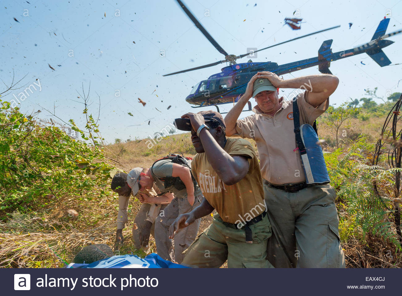 Helicopters deliver park staff to a remote slope Mount Gorongosa. - Stock Image