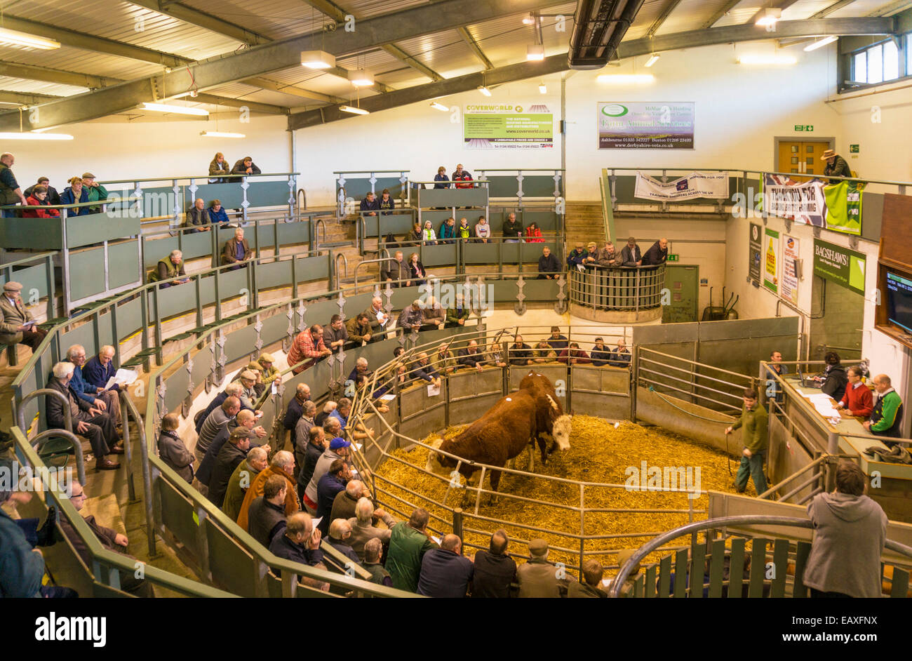 Bakewell Livestock Market Bakewell Peak District Derbyshire England UK GB EU Europe - Stock Image