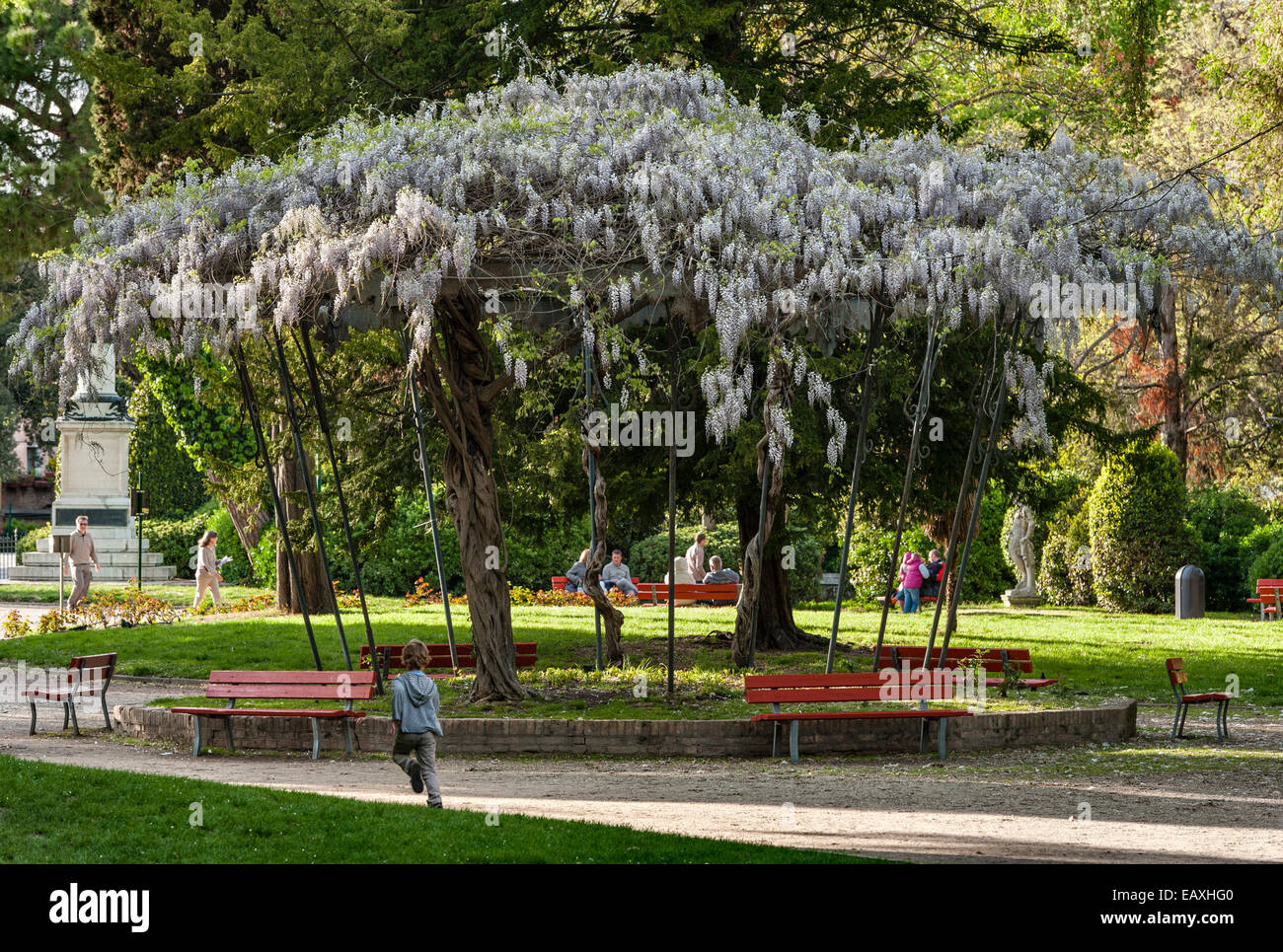 Venice, Italy. In the Biennale Gardens, an old bandstand is covered with white wisteria in the spring - Stock Image