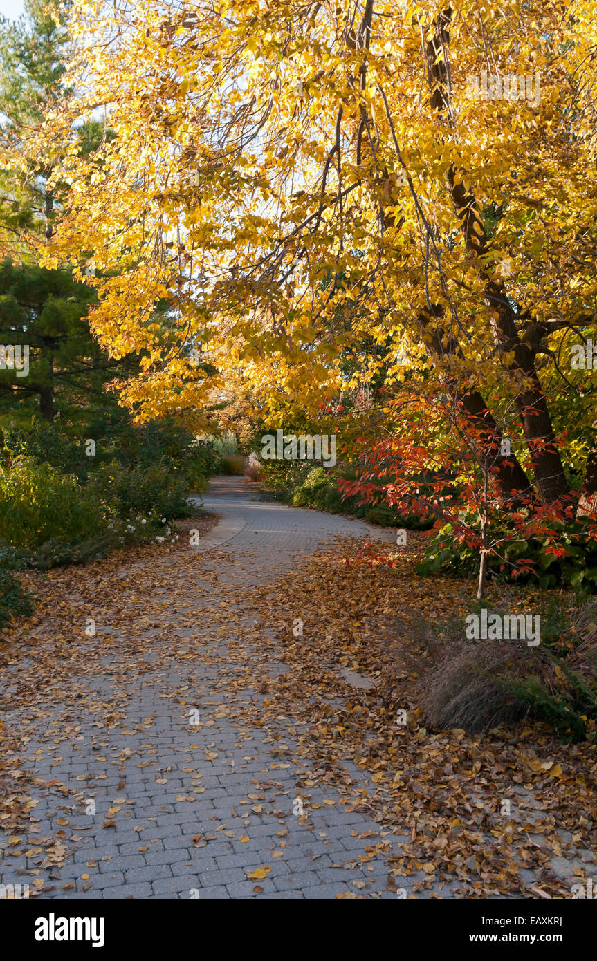 Winding tree-lined path at Olbrich Botanical gardens during autumn ...