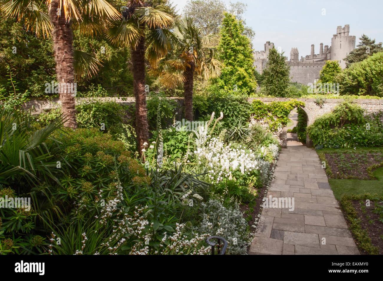 Arundel Castle the white garden plant combination consisting of Allium, Digitalis, Lupinus, Onopordium - Stock Image
