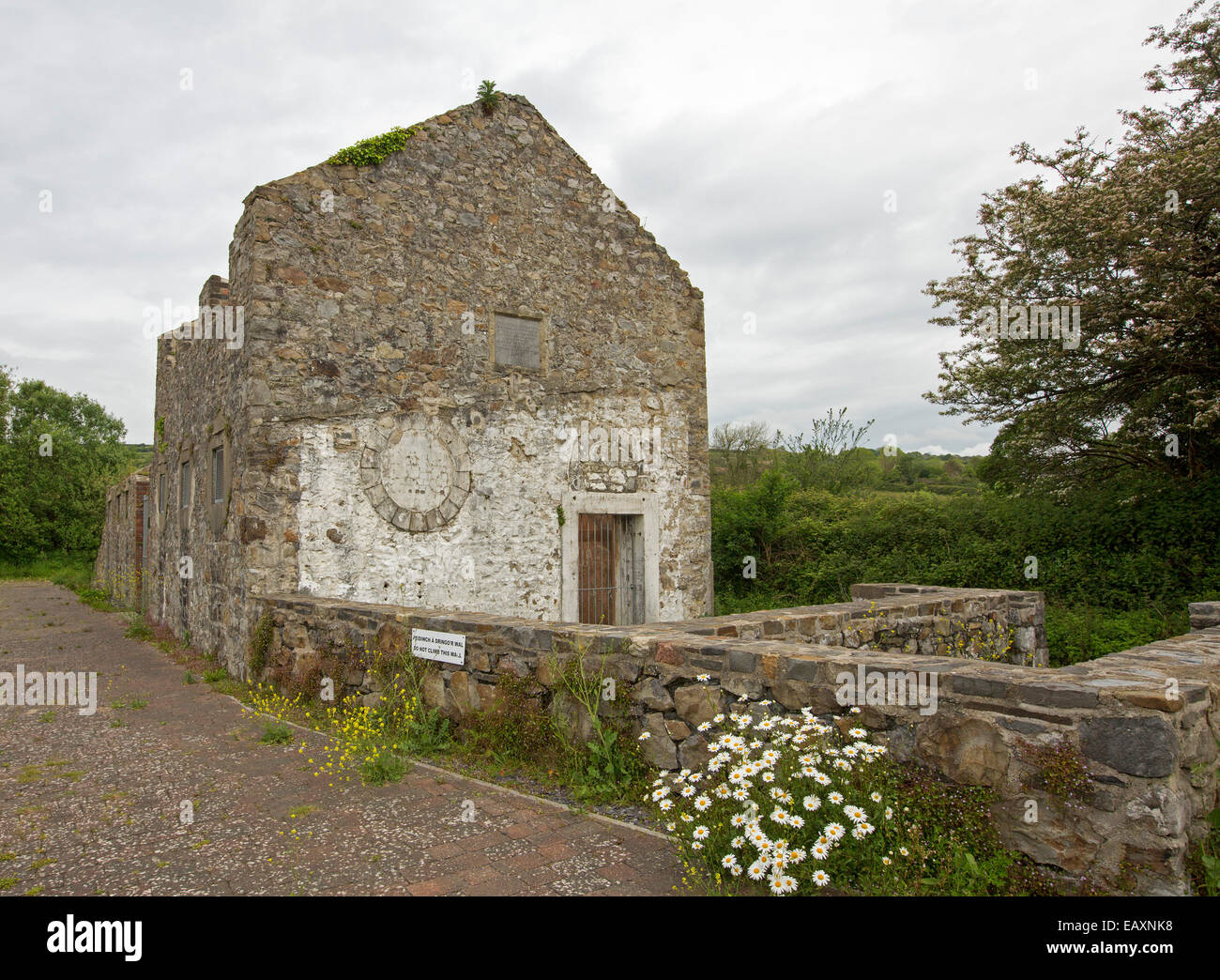 Ruins of old stone slaughter house at Kidwelly, Wales, with wildflowers growing by low wall and hemmed by green - Stock Image