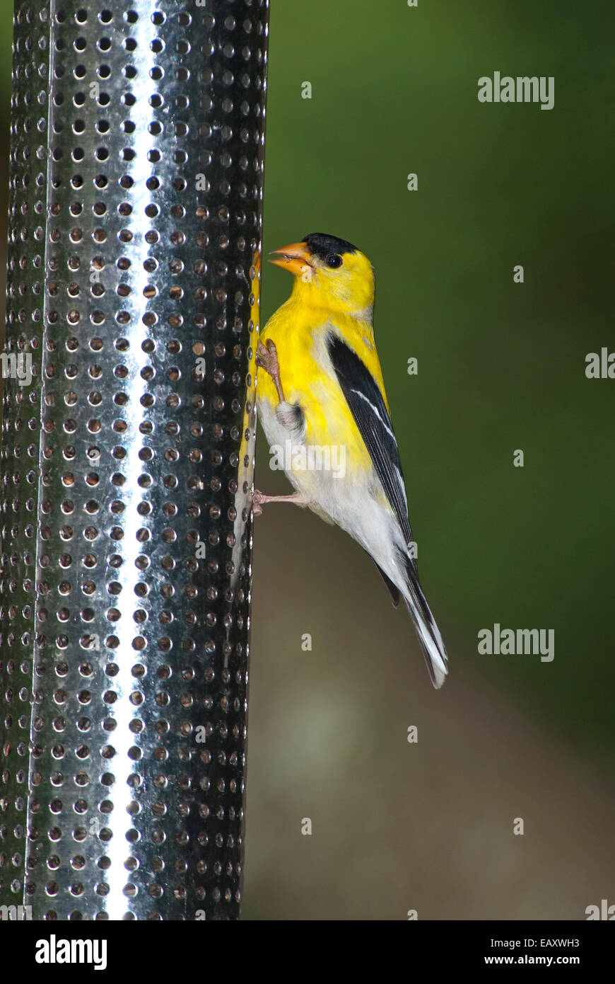 how to build a goldfinch feeder
