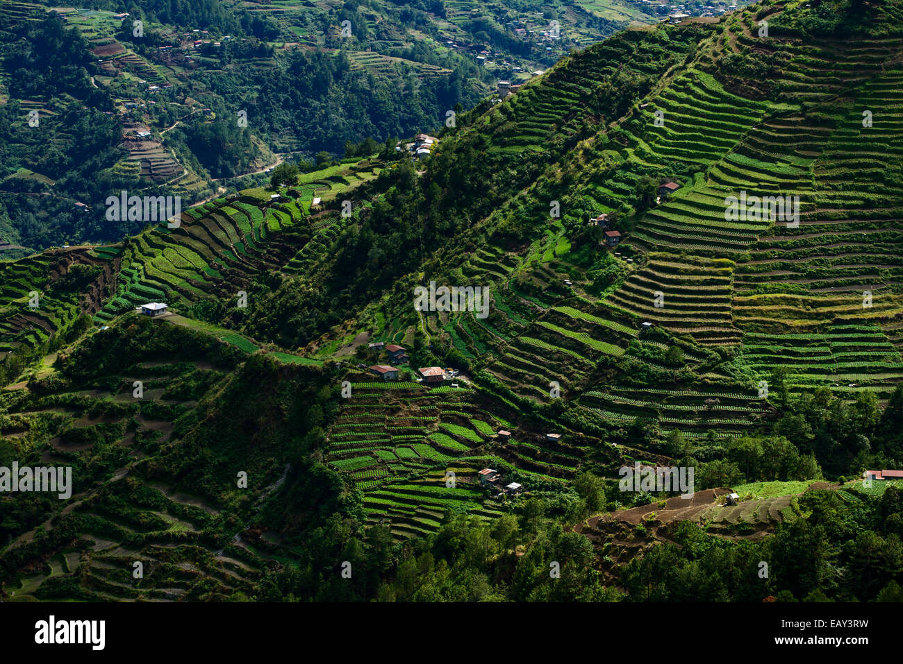 Rice terraces, North Luzon, Philippines - Stock Image