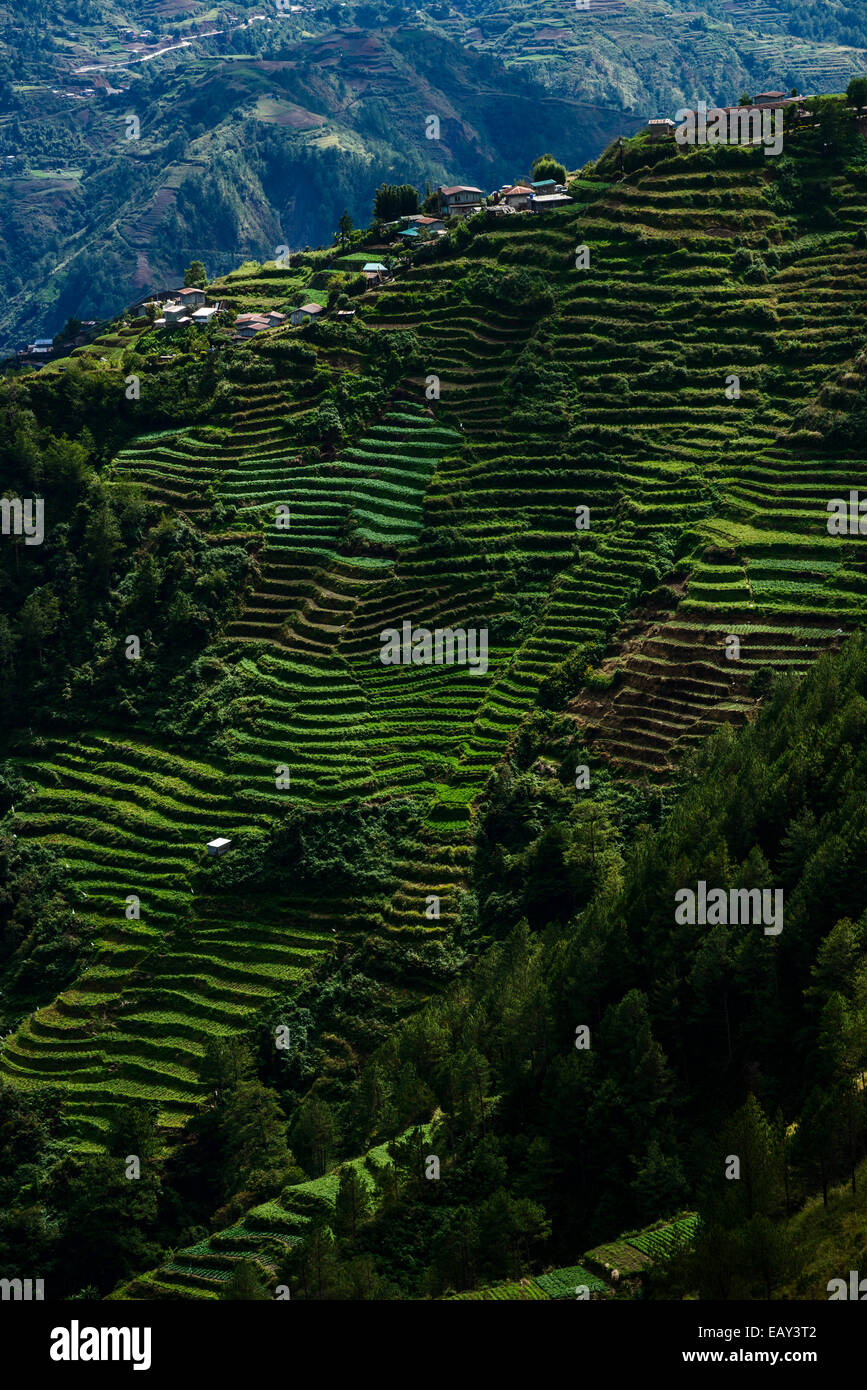 Rice terraces, North Luzon, Philippines - Stock Image