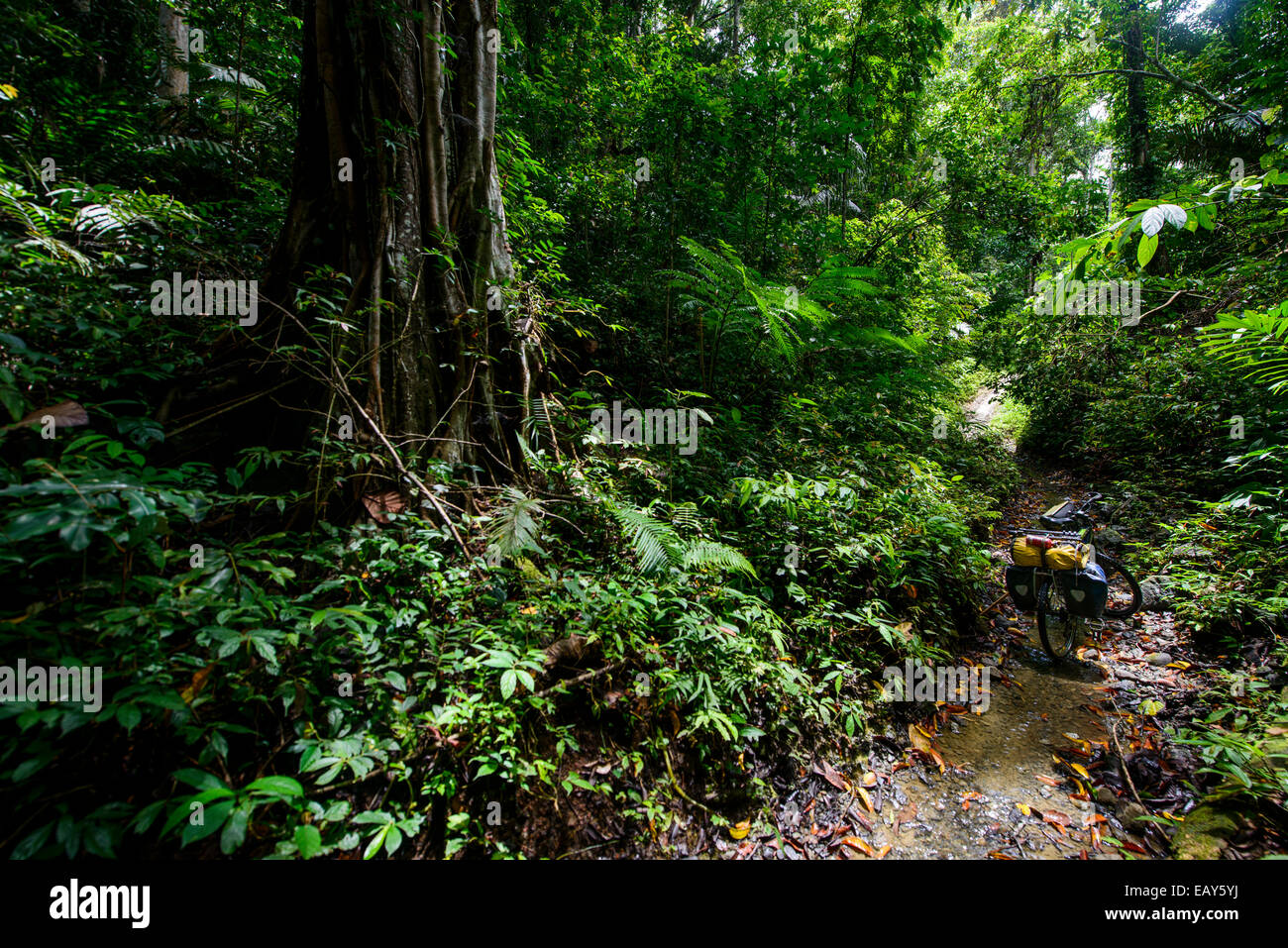 Cycling tour in the jungle, Sulawesi, Indonesia - Stock Image