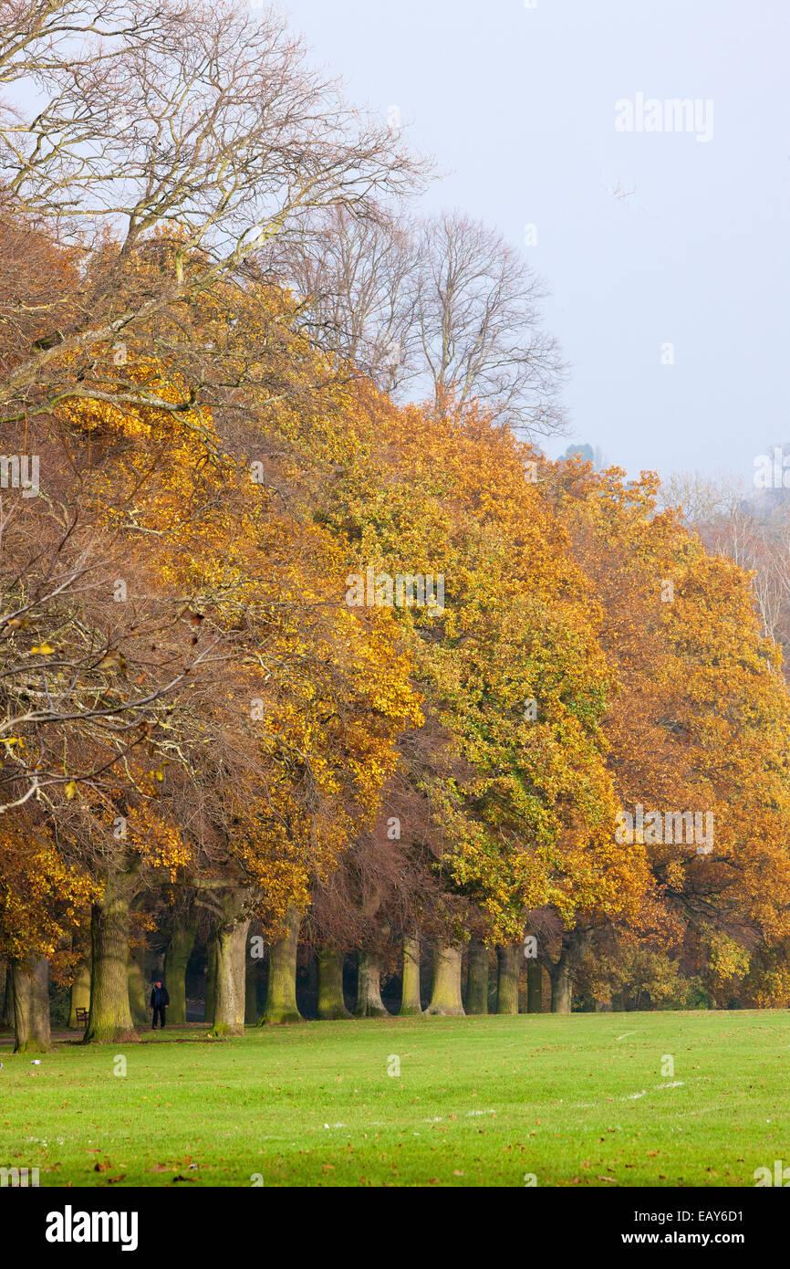 Trees turning Autumn colours in Abington Park Northampton. - Stock Image