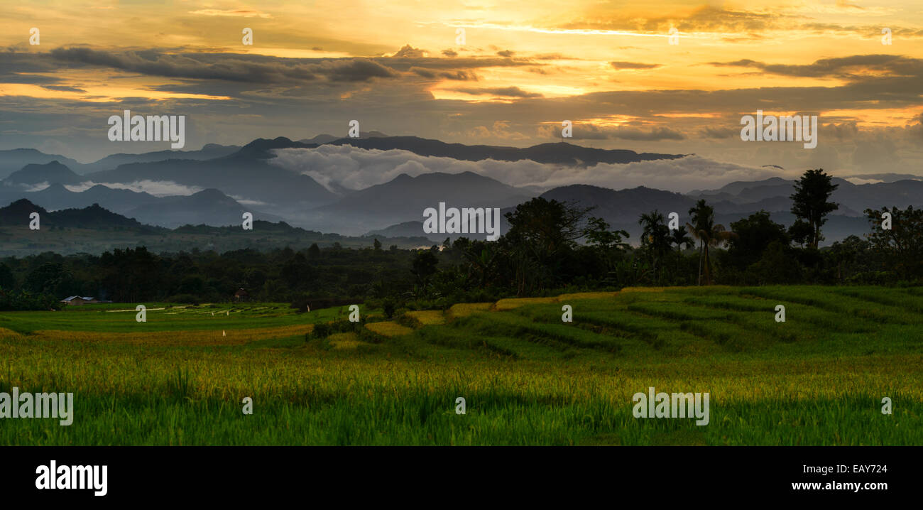 Rice terraces, Flores, Indonesia Stock Photo