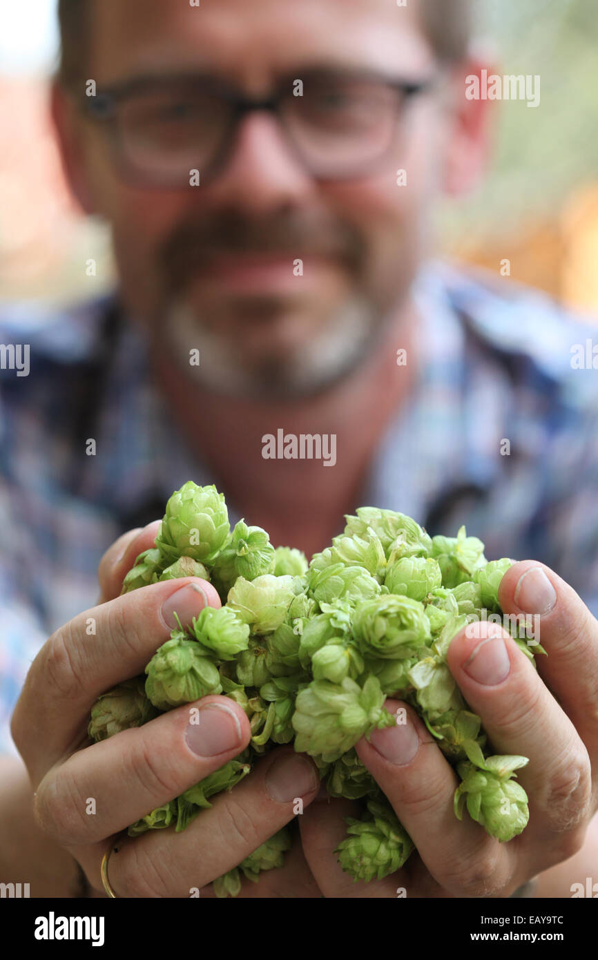 Portrait of an urban farmer presenting harvested hop umbels in his hands - Stock Image