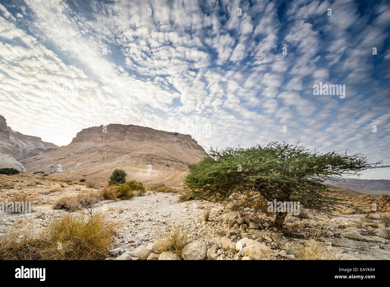 Masada, Israel ancient rock plateau fortress in the Judaean Desert. - Stock Image