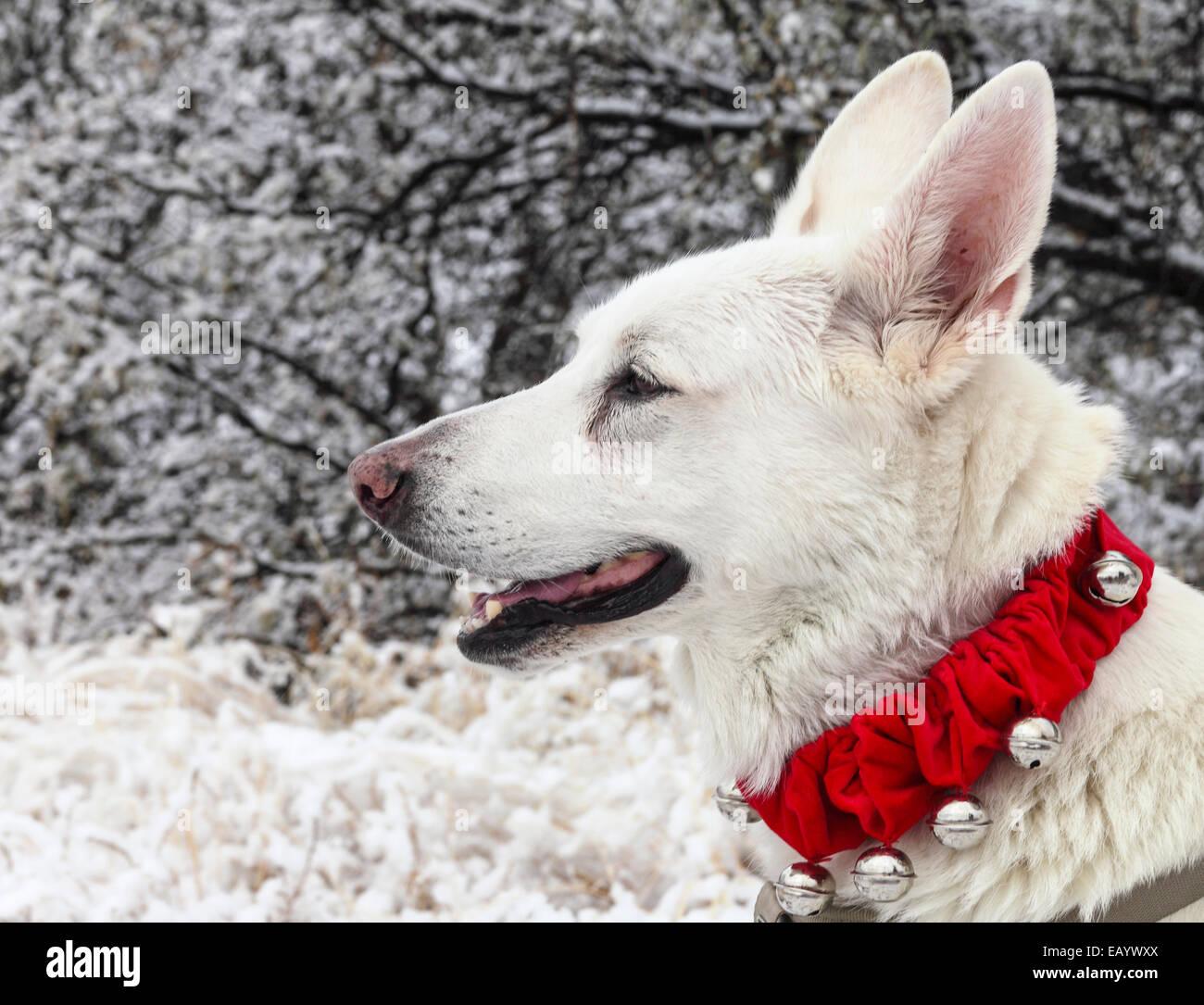 Dog Cactus Stock Photos & Dog Cactus Stock Images - Alamy