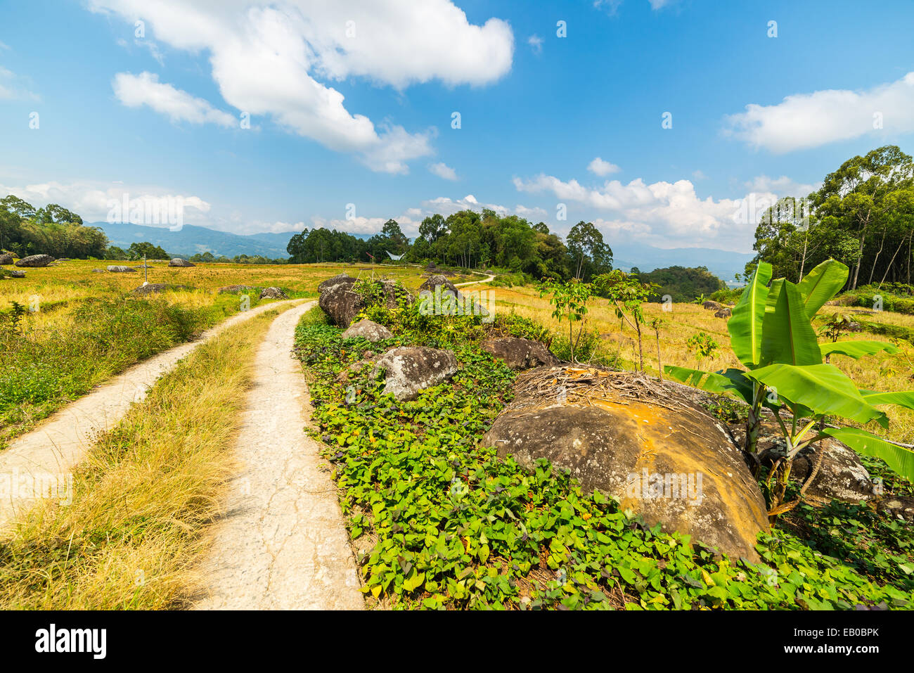 Winding country road leading through the multi colored rice fields of Batutumonga into the stunning landscape on - Stock Image