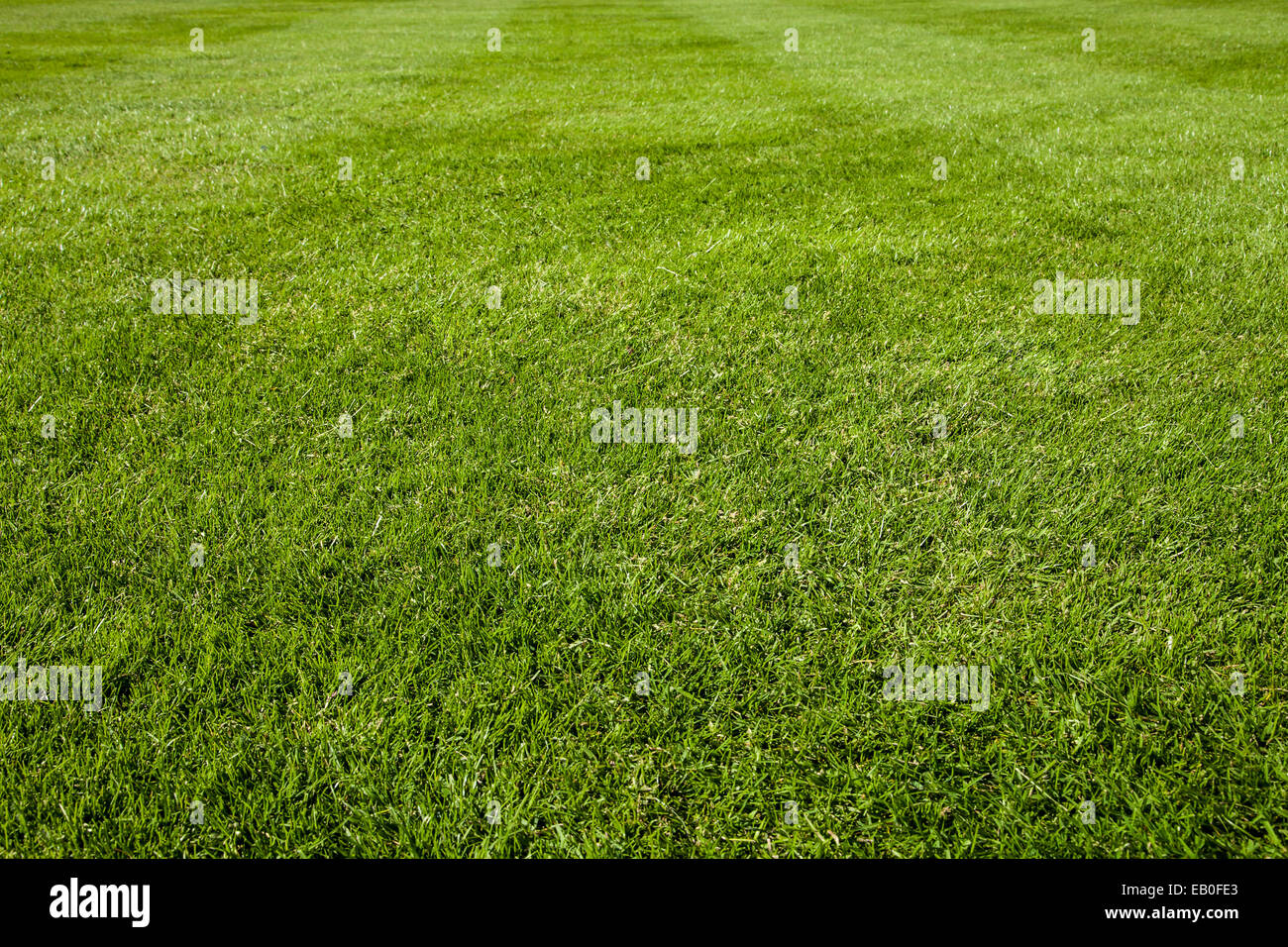 green lawn, soccer field with stripes - Stock Image